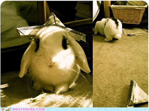acting like animals,bunny,do not want,happy bunday,hat,leaving,no thanks,nope,not interested,paper,rabbit,sailing