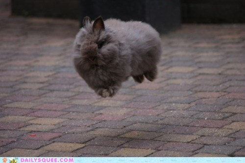 acting like animals bunny Hall of Fame happy bunday hover hovering jump jumping mid air rabbit - 5783944192
