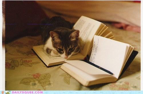acting like animals bohumil hrabal book cat crib notes notebook novel too loud a solitude translating translation working - 5784051712