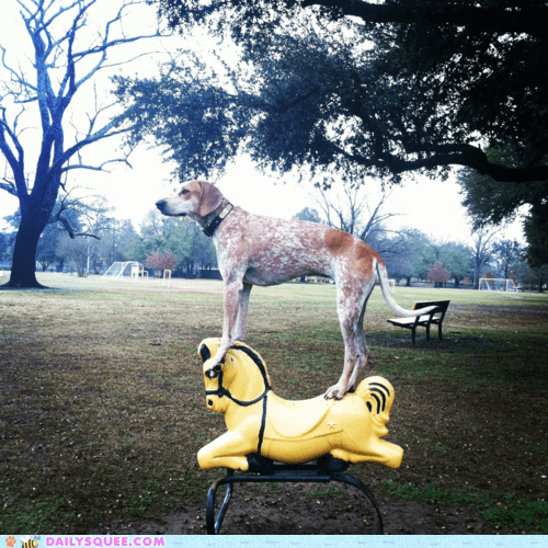 acting like animals,coonhound,horse,paul revere,playground,posing,standing