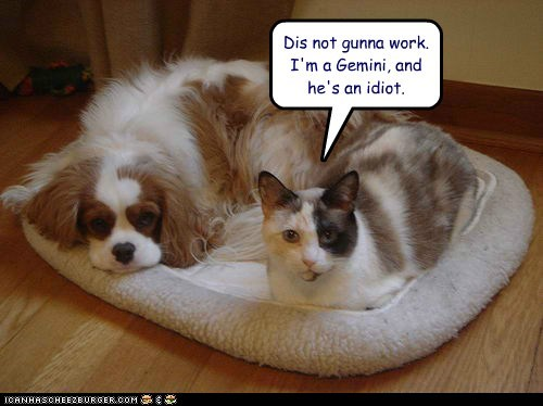 caption captioned cat dogs failure gemini horoscope idiot incompatible not relationship working - 5784149504