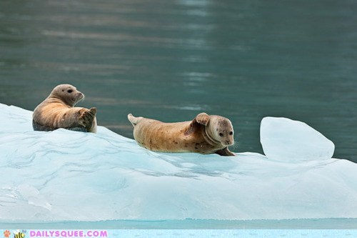 Babies baby reference seal seals sliding slipping - 5784464896