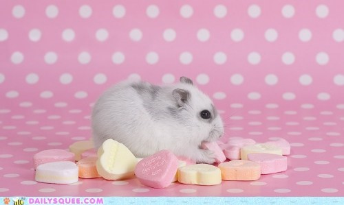 candy Hall of Fame hamster hearts love nomming noms unbearably squee - 5784474112