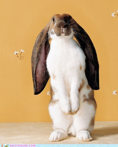 bunny ears fractions Hall of Fame happy bunday length long math proportions rabbit