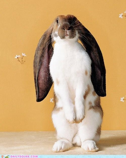 bunny ears Hall of Fame happy bunday long math proportions rabbit - 5784550400