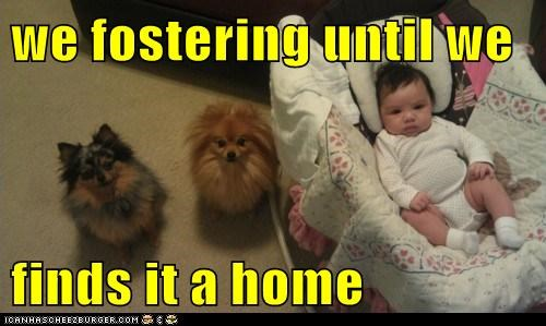 we fostering until we finds it a home