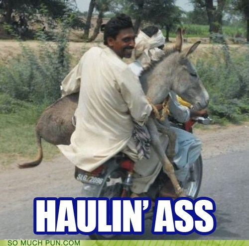 ass donkey double meaning figurative Hall of Fame hauling idiom literalism - 5785174784