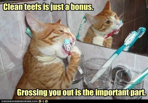 bonus,caption,captioned,cat,gross,important,objective,part,tabby,toothbrush