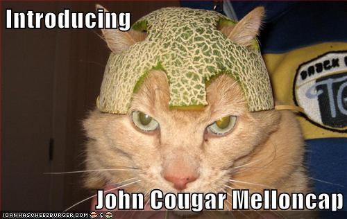 animals cat food I Can Has Cheezburger john cougar melloncap mellon what