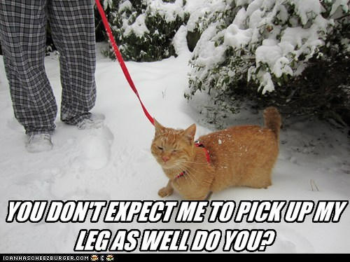 YOU DON'T EXPECT ME TO PICK UP MY LEG AS WELL DO YOU?