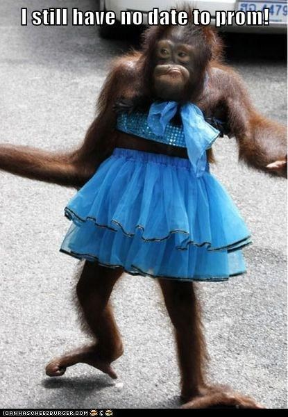 date dress orangutan pretty prom - 5786373888