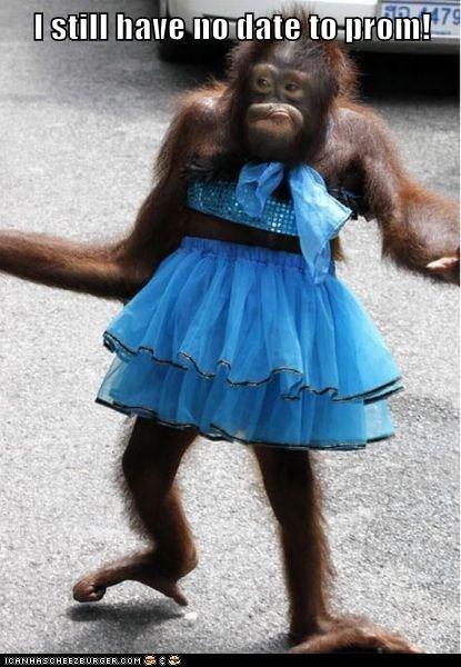 date dress orangutan pretty prom - 5786373888