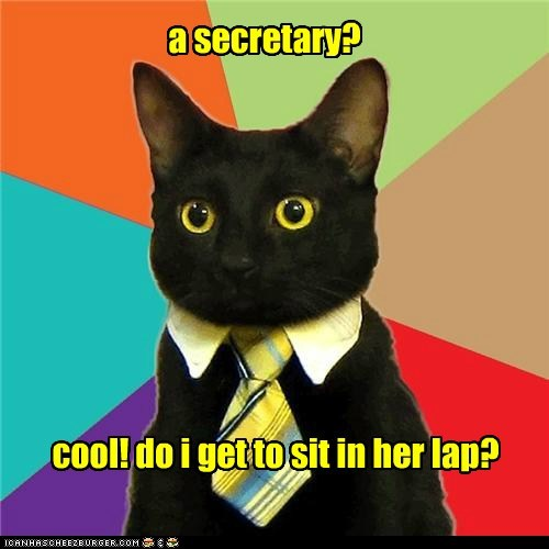Business Cat: Just Asking That Is a Serious HR Violation