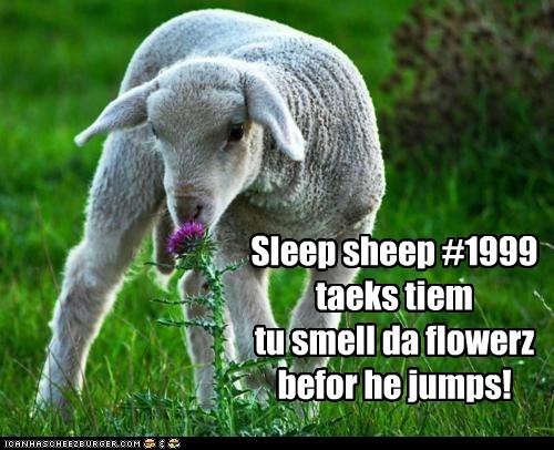 Sleep sheep #1999 taeks tiem tu smell da flowerz befor he jumps!