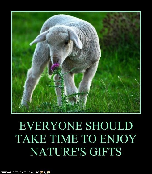 enjoy,field,Flower,lamb,nature,sheep,smelling