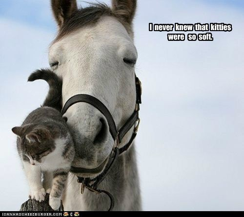 cat Cats cute discovery horse horses Interspecies Love never know pets soft - 5787649024