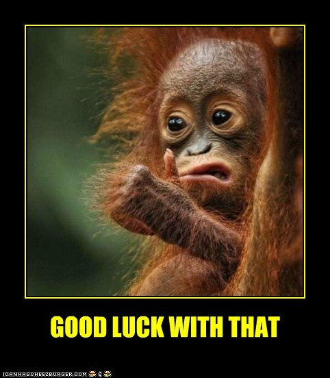 monkey orangutan thumb thumbs up - 5787674880
