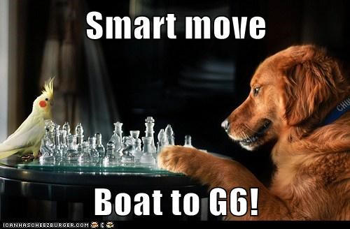 bird,board game,boat,chess,cockatiel,dogs,game,i have no idea what im do,i have no idea what im doing