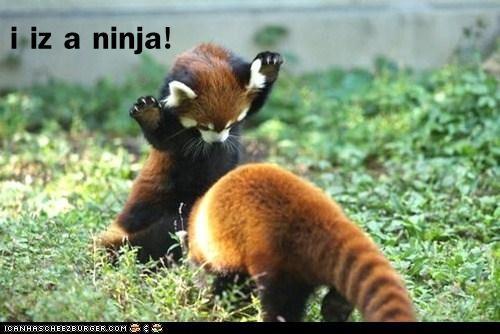 ninja red panda - 5787732992