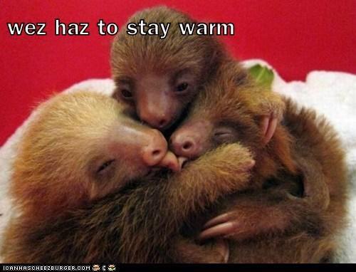 wez haz to stay warm
