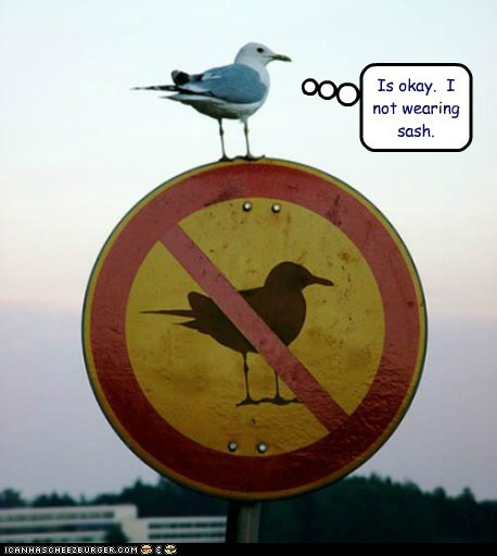 bird,defiant,different,not allowed,sash,seagull,sign