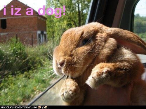 bunny car rabbit window - 5787775232
