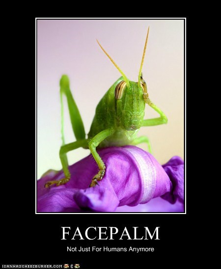 facepalm Flower frustration grasshopper insect - 5787840768