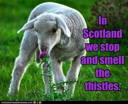 In Scotland we stop and smell the thistles.