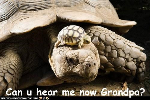 can you hear me now,Grandpa,hard of hearing,kid,turtles,what