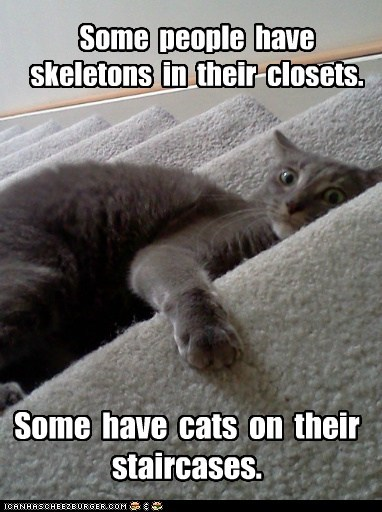 best of the week caption captioned cat Cats closets have others people skeletons some staircases