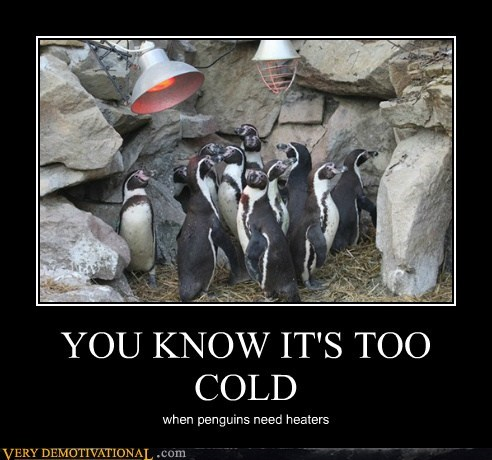 YOU KNOW IT'S TOO COLD when penguins need heaters