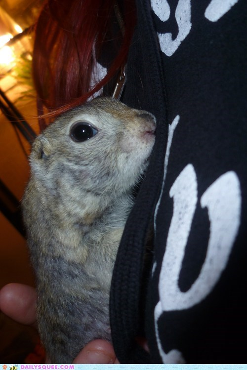 baby ground squirrel reader squees squirrel - 5790444800