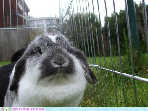 Bunday,bunny,cage,grass,reader squees,yard
