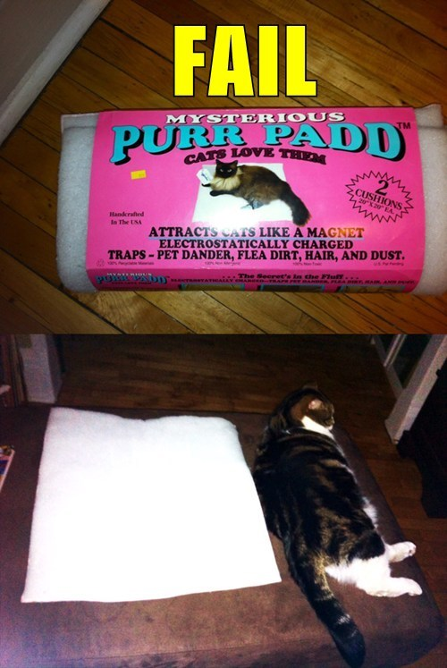 animals,Cats,fail nation,g rated,product fail