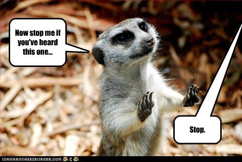 boring joke meerkat old jokes stop - 5791456000