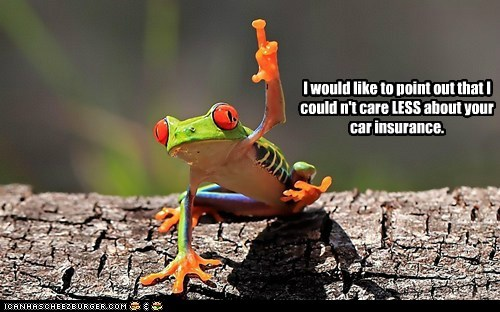 amphibian,annoyed,car insurance,confusion,couldnt-care-less,frog,indignant