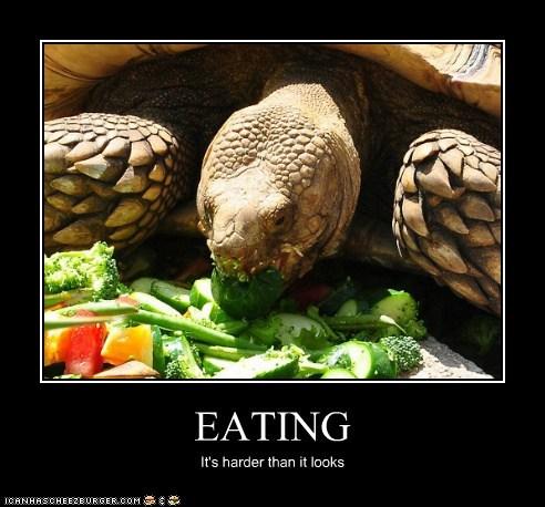 Cheezburger Image 5792141312