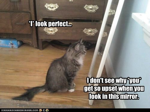 caption captioned cat confused image mirror perfect - 5793655040