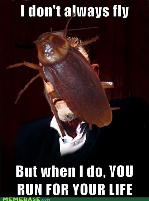 bugs,fly,Terrifying,the most interesting man in the world