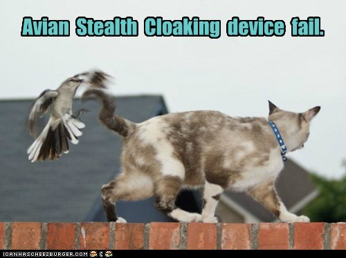 avian,bird,cat,cloaking,device,FAIL,fall back,sneaky,stealth