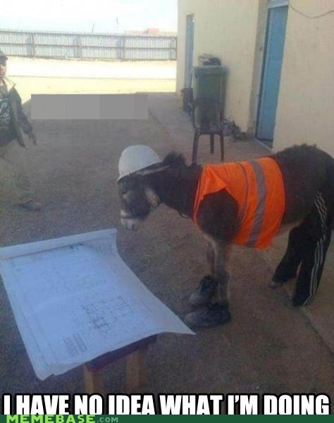 construction,donkey,hard hat,Memes