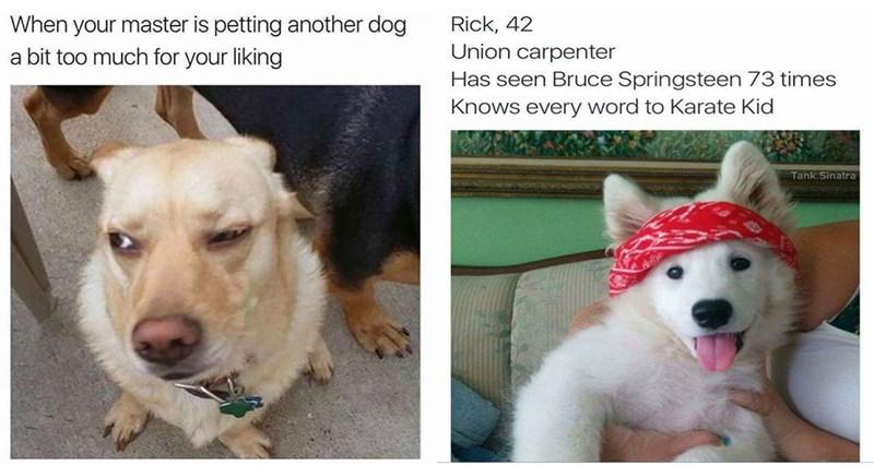 dogs dog memes funny memes Memes animal memes - 5795333