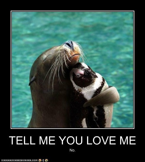 annoyed best of the week Hall of Fame hug hugging hugs love no penguin penguins seal seals unrequited love - 5796082432