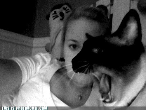 animal Animal Bomb cat feed me yawn yelling - 5796963072