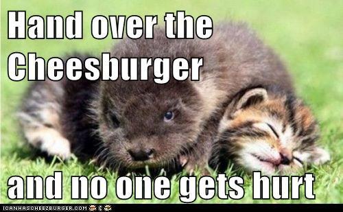 Cheezburger Image 5797561600