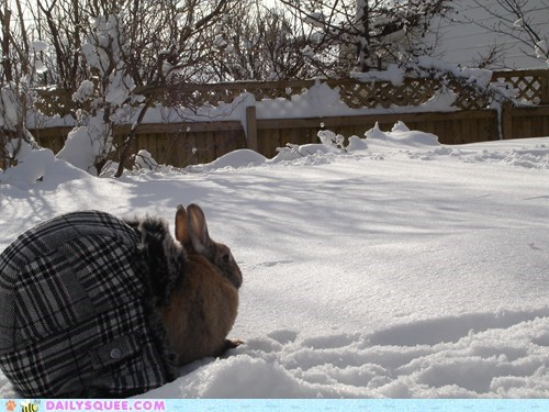 bunny,happy bunday,hat,rabbit,reader squees,resemblance,shell,snow,turtle