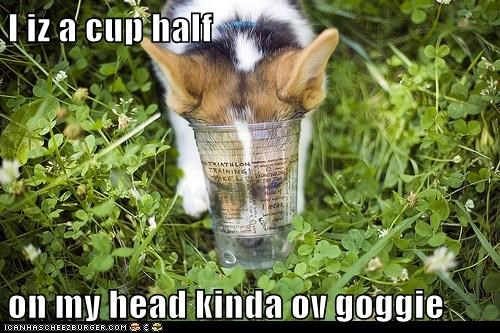 I iz a cup half on my head kinda ov goggie