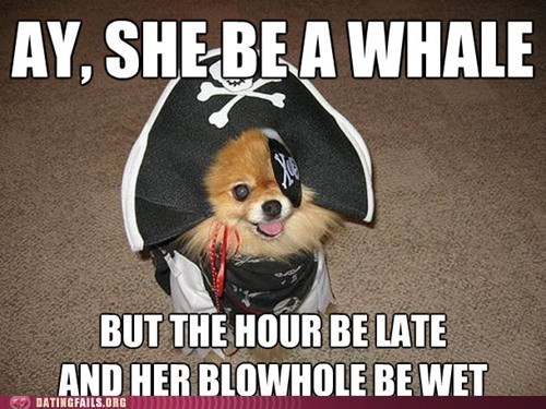 arr,dogs,double entendre,innuendo,Pirate,shiver me timbers,whale