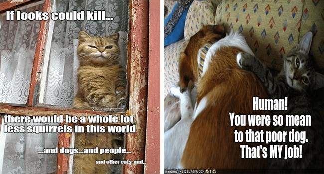cat memes about looks that could kill and comforting a dog