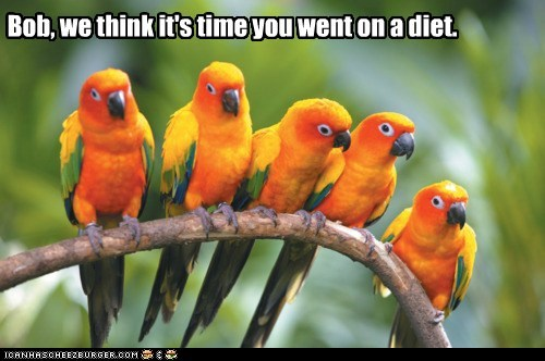 birds bob branches diet diets fat overweight